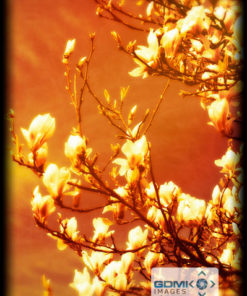 Digital art creation of a Magnolia tree in bloom