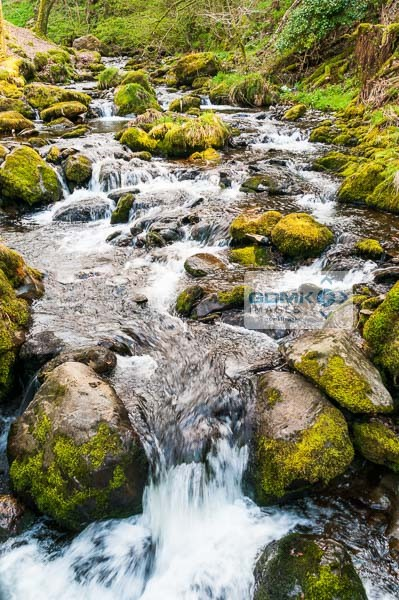 Water flowing over rocks in a forest stream near Dolgoch
