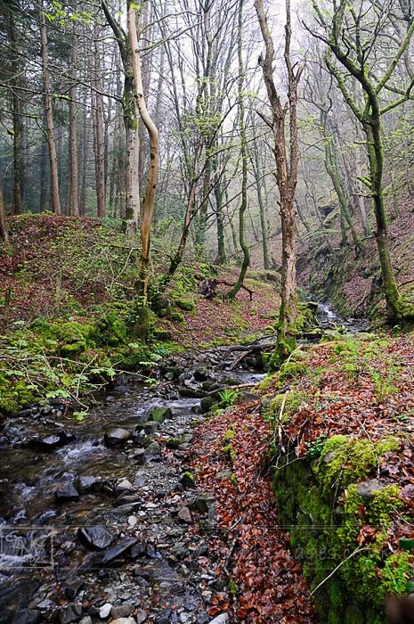 A stream winding through woods in Snowdonia