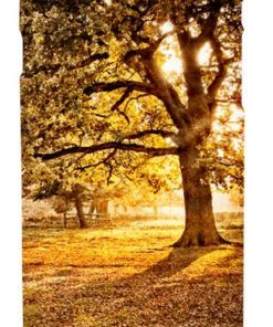 Mobile phone case featuring golden evening light streaming through trees