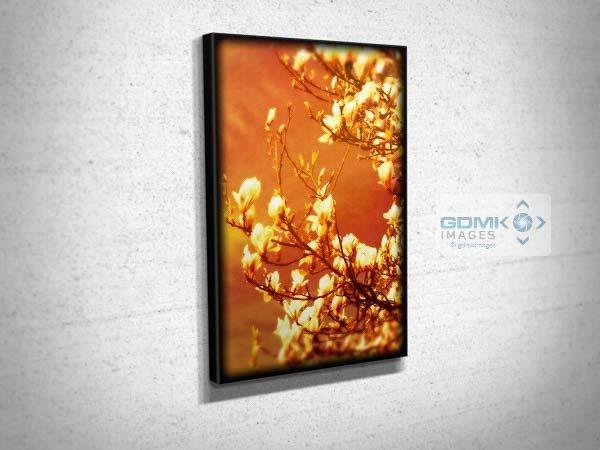 Digital Art Magnolia Blossom Canvas Print