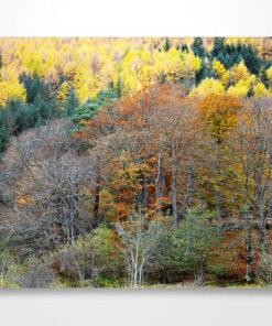 Autumn Coloured Trees in Glen Nevis Wall Art Print