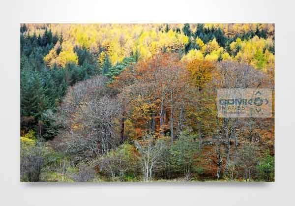 Autumn Coloured Trees in Glen Nevis Wall Art Print