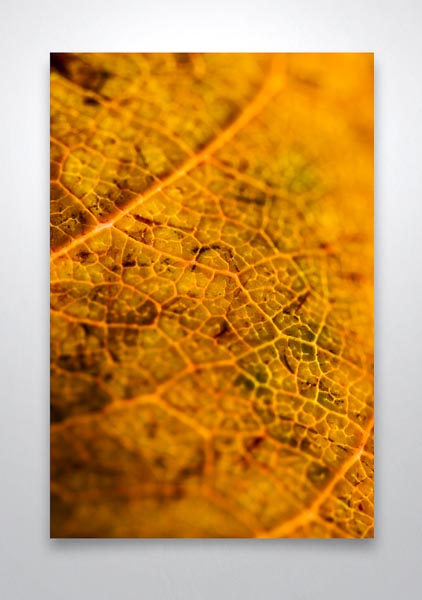 Brown Leaf Textures Wall Art Print