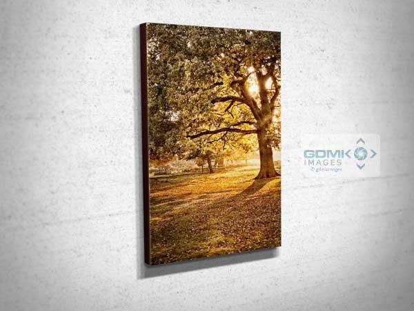 Evening Light Shining Through Trees Canvas Print