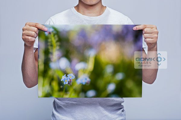 MAn Holding Forget Me Not Flower Wall Art Print