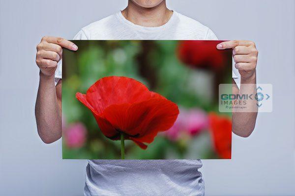 Man Holding Red Poppy Flower Wall Art Print