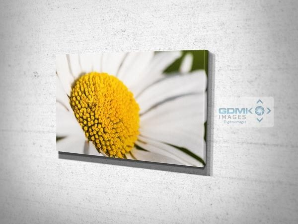 Oxeye Daisy Flower Canvas Print