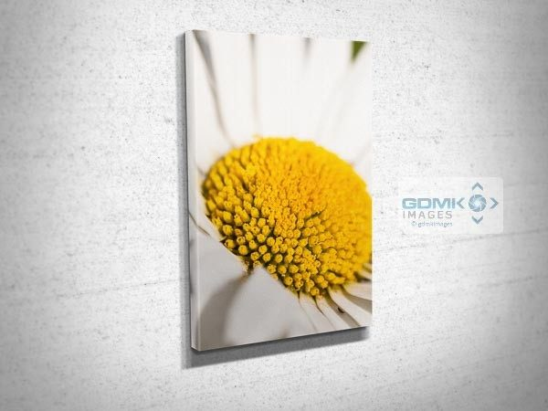 Oxeye Daisy Flower Closeup Canvas Print