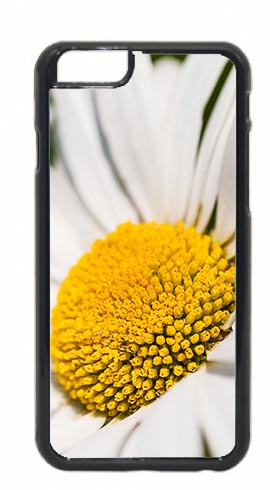 Oxeye Daisy Flower Closeup Mobile Phone Case