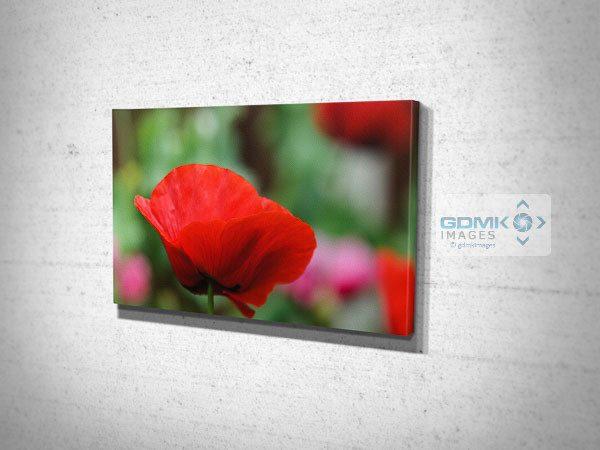 Red Poppy Flower Canvas Print