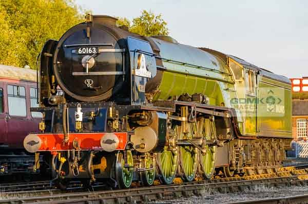 60163 A1 Tornado bathed in summer evening light at Barrow Hill depot