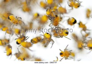extreme-closeup-of-a-cluster-of-tiny-baby-spiders-D9GT1F